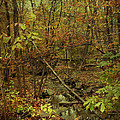 Unami Creek Feeder Stream In Autumn - Green Lane Pa by Mother Nature