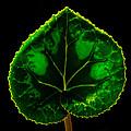 Under Leaf by Mitch Shindelbower