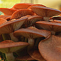 Under The Mushroom Mound by Debbie Portwood