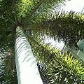 Under The Palm by Jan Prewett