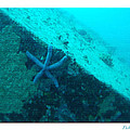 Under The Sea C by Debra     Vatalaro