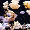 Under The Sea by Debbie Morlock