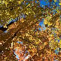Underside Of Fall by Eric Gordon
