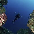 Underwater Photographer At The Entrance by Mathieu Meur