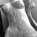 Undressed In Black And White Frontal View by Holly Suzanne