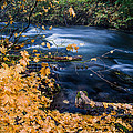 Union Creek In Autumn by Greg Nyquist