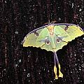 Unique Butterfly Resting On Tree Bark by Natural Selection Jeff Lepore