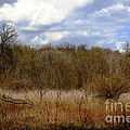 Unspoiled Prairie Landscape by Alan Look