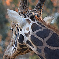 Up Close And Personal by Maggy Marsh