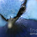 Up Close And Personal by Wendy Slee