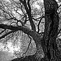 Up Tree by Sean Wray