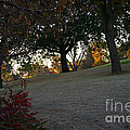 Uphill Sunrise by Susan Herber