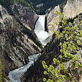 Upper Falls Of The Yellowstone River by Jon Berghoff