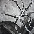 Upside-down Orchid by Estephy Sabin Figueroa