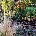 Urban Garden With Cactus by Lorraine Devon Wilke