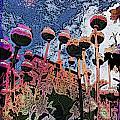 Urban Poppy by Tim Allen