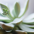 Usa, New Jersey, Jersey City, Close-up Of Succulent Plant by Jamie Grill