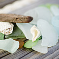 Usa, New York State, New York City, Brooklyn, Collection Of Sea Glass by Jamie Grill