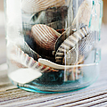 Usa, New York State, New York City, Brooklyn, Shells In Jar by Jamie Grill