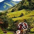 Vaca by Skip Hunt