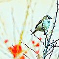 Valentine Sparrow  by Artistic Photos