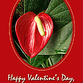 Valentine's Day Red Anthurium by Mother Nature