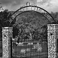 Vance Cemetery Black And White by Donna Greene