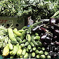 Variety Of Fresh Vegetables - 5d17828 by Wingsdomain Art and Photography