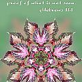 Varigated Foliage Star Heb. 11v1 by Linda Phelps
