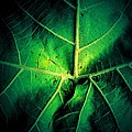 Veins Of A Sycamore Leaf by Beth Akerman