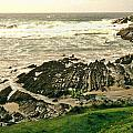 Velencia Island Shore by Douglas Barnett