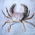Velvet Crab  Study by Pg Reproductions