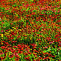 Velvet Spring by Maricar Edano Casaclang
