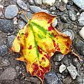 Vermont Foliage - Leaf On Earth by Elijah Brook