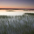Vernal Pool At Sunrise Jepson Prairie by Sebastian Kennerknecht