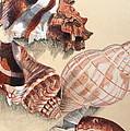 Vertical Conch Shells by Glenda Zuckerman