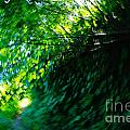 Vertigo  by Jeff Swan