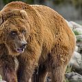 Very Big Bear by Greg Nyquist