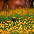 Vesuvius Wildflowers by Carlos Diaz