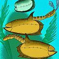 Vetulicola Species II by Stanton Fink