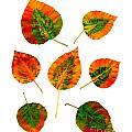 Vibrant Autumn Leaves by Renee Trenholm