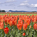 Vibrant Orange Spring by Priya Ghose