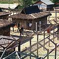 Vietnam War, Chu Lai, Vietnam, Prisoner by Everett