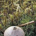 Vietnamese Conical Hat And Rice Cutting by Axiom Photographic