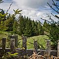 View From Picket Fence by Greg Nyquist