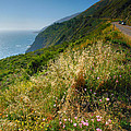 View From The Pacific Coastal Highway by Steven Ainsworth