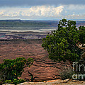 View Of Canyonland by Robert Bales