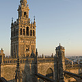 View Of The Giralda Tower by Krista Rossow