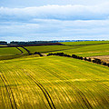 View On Fields by Svetlana Sewell