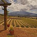 View Toward Mt Shasta Horizontal by Mick Anderson